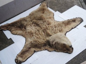 熊のラグマット